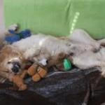 Teodor i jego zabawki
