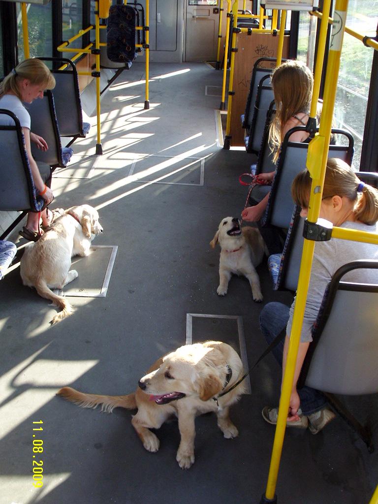 Publiczna socjalizacja - tramwaj