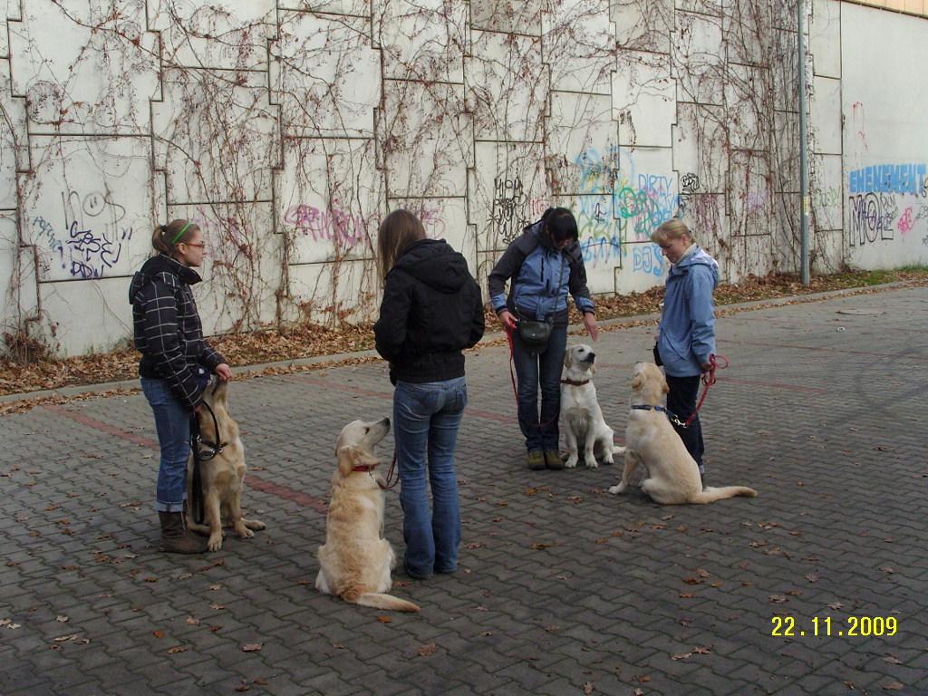 Uwaga -przywitanie z drugim psem