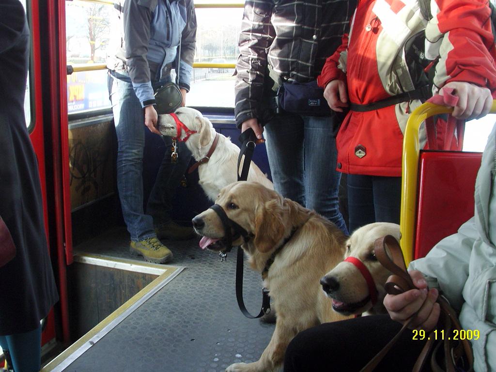 Socjalizacja - tramwaj