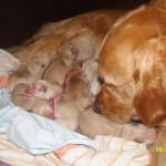 Mamusia i maluchy