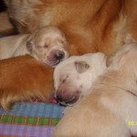 Przytulę się do mamy