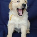 Żółty chłopczyk - 6 tygodni