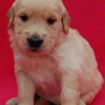 fioletowy chłopczyk - 4 tydzień