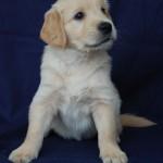 Fioletowy chłopczyk - 6 tygodni