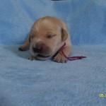 Fioletowy - chłopczyk - 1 tydzień