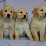 Trzy dziewczyny :)