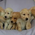 Pięć chłopaków :)