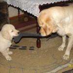 Zabawa z starszą siostrą :)