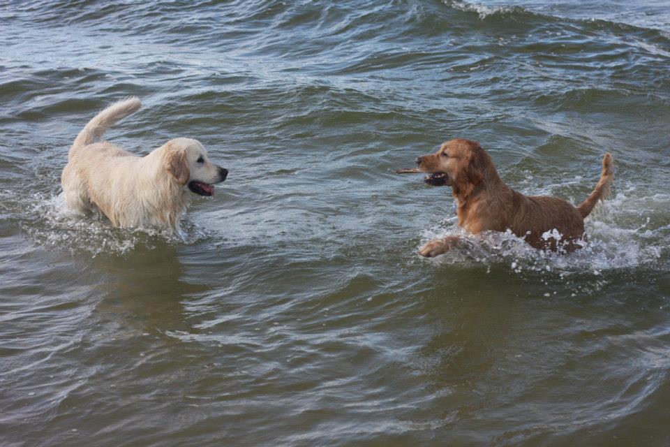Defa, Nico i morze