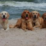 Naszed wspaniałe psiaki