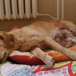 Drugi dzien po porodzie